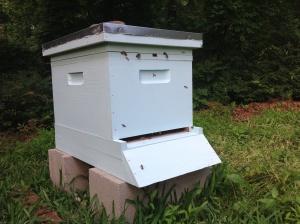 Regular hive opening