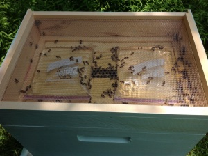 from the top of the hive, you see the baggie feeders and hive entrance through the screened inner cover