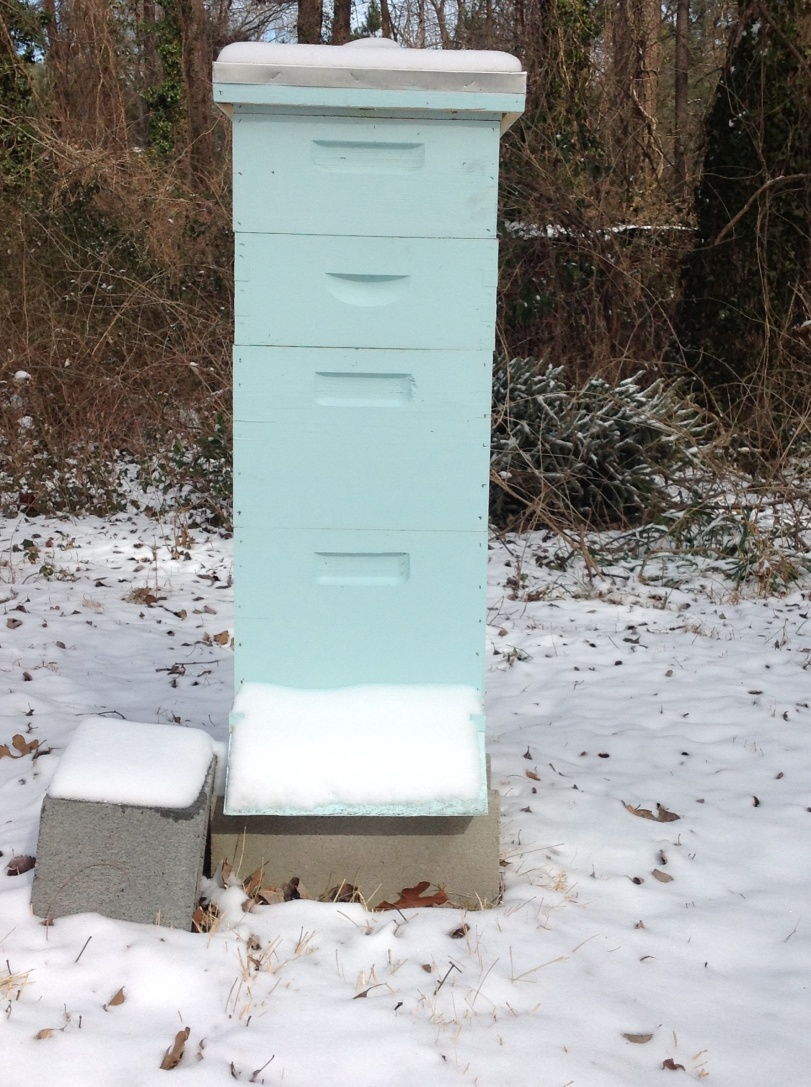 Day 263--The Hive's First Snow