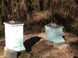 The yard now has two hives