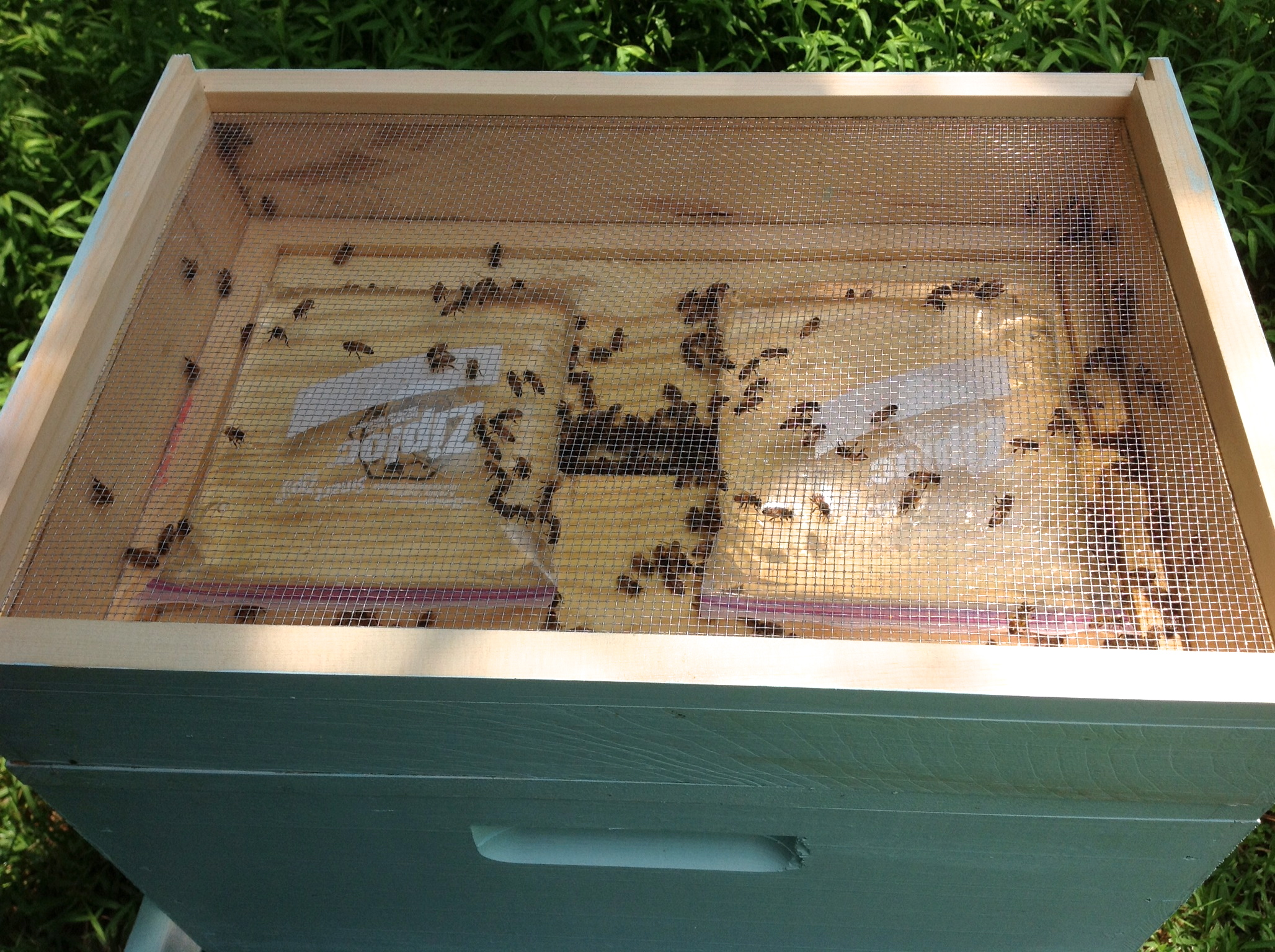 forum top hives mb feeders for t feeder with flow floats bee hive