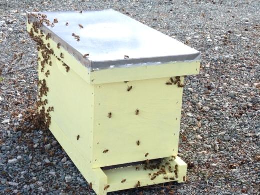 Swarm entering nuc box